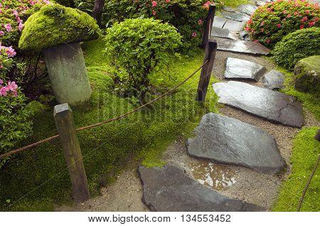 wet stone steps among fresh green plants in Japanese zen garden