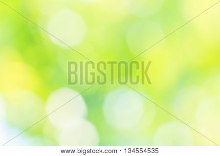 Blurred summer background with sun glare in the green grass and yellow flowers close up