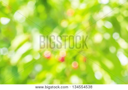 Blurring background of garden with sun glare on the leaves and berries on a sunny summer day