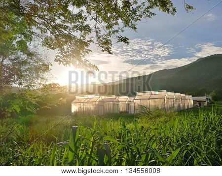 Plant Nursery Of Organic Vegetable Surrounded By Nature And Trees With Sunlight Of The Evening