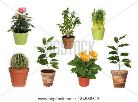 House plant in brown pot isolated on white background.