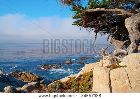 Coast view Big Sur California USA Monterey