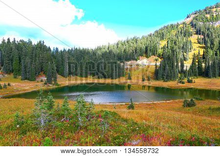 Nice landscape Mount Rainier national park Washington
