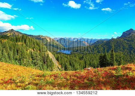 Nice landscape at Mount Rainier national park Washington