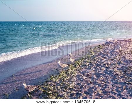 Beautiful sea with blue summer wave and seagulls on the beach. Summer sea background in violet tones. Tropical sea. Summer sea and beach. Endless sea. Daylight sea. Turquoise sea. Toned image.
