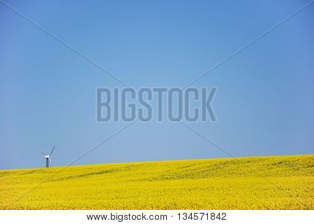 Wind turbine at the horizon in a blossom rapeseed field