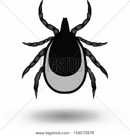 vector image of a tick on white background