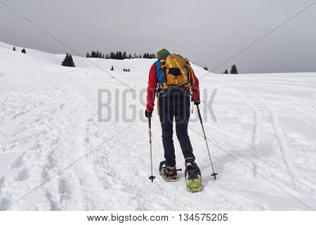 Person cross-country trekking in winter snow using snowshoes and poles walking away from the camera across a snowy plateau towards distant pine trees