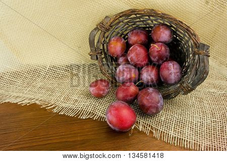 blue plum spilled from a wicker basket on a wooden table old
