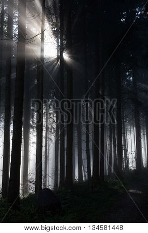 Sunbeam in dark forest as a symbol of hope