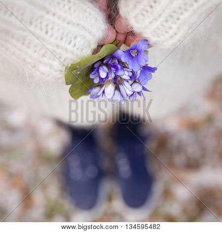 Beautiful snowdrops in hands of a young woman in white cardigan and blue shoes. First spring flowers in a forest. Beginning of spring in a forest.