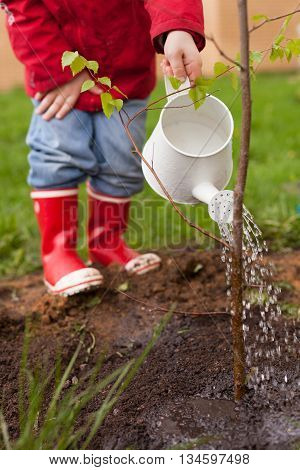 4 years old boy in a red jacket blue jeans and rubber boots is planting a thin tree and watering it from a nice white watering can. Spring planting on the green house lawn. Outdoor.