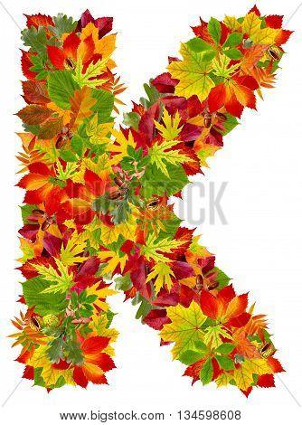 K autumn alphabet isolated on white background