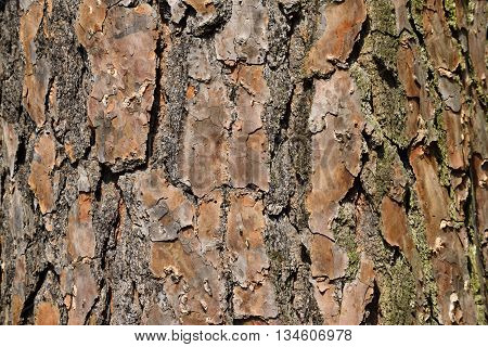 Tree bark background at forest area Georgia, USA.
