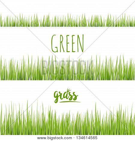 Set realistic green grass lawn isolated on white. Floral eco nature background. Organic food, healthy food. Web vector illustration.