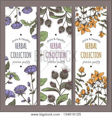Set of three color vector herbal tea labels with burdock, chicory and saint john wort hand drawn sketch. Placed on white background.