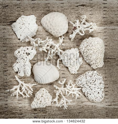 Sun bleached pieces of corals and shells found on a beach arranged on rustic wood background