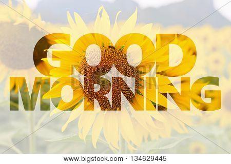 Good morning word on sunflower background for design