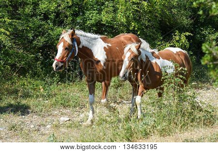 White and brown horses walking on footpath.