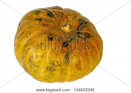 Shiny Mature Pumpkin With Marks And Scratches