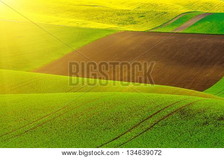 Rural landscape with green fields and waves, abstract natural sunny background with yellow rapeseed plants