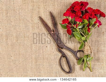 Bouquet of Red Roses and Old Rusty Scissors on on rustic jute background