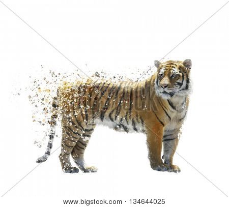 Digital Painting of Tiger on White background