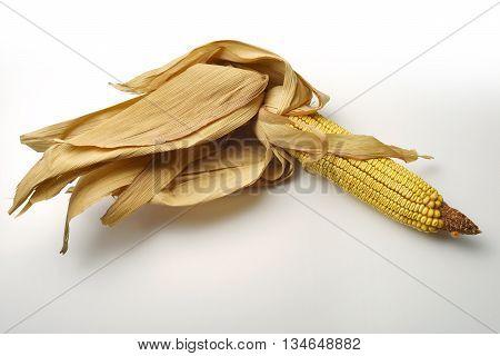 Single Mature maize ear on white table
