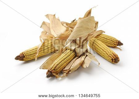 Four Mature maize ears isolated on white