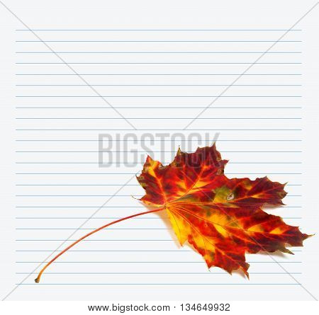 Multicolor Autumn Maple-leaf And Notebook Paper