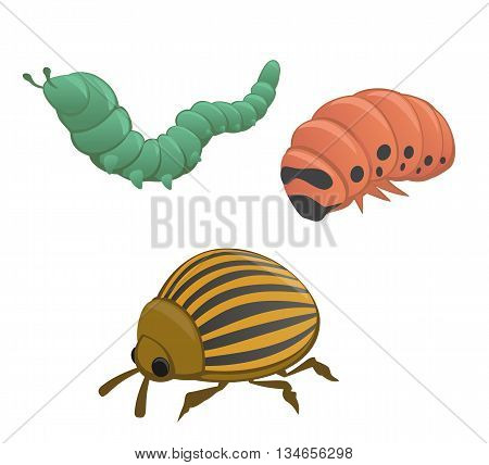 Green and pink caterpillar colorado potato beetle isolated on white background. Vector flat illustration.