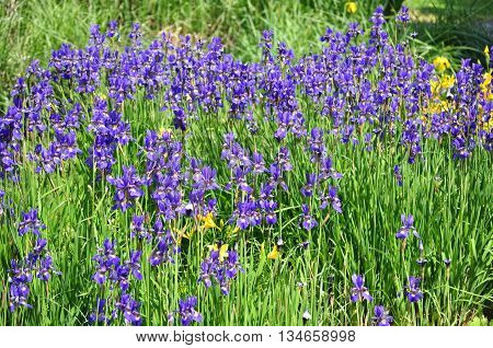 Blue meadow flower around the lake background