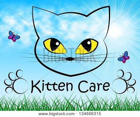 Kitten Care Means Look After And Cat
