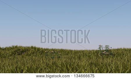 3d illustration of the grass landscape