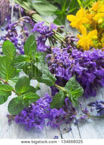 fresh herbs cosmetics, St John;s wort, mint and lavender