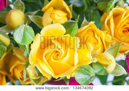Yellow Rose Spray Flower With Rosebuds Close Up