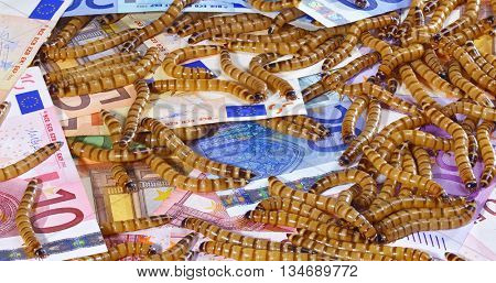 Big ugly worms crawling over euro banknotes background, economic crisis concept