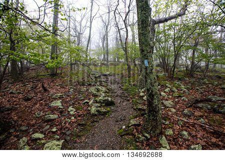 Foggy Blue Blaze Trail in Shenandoah on a rainy morning
