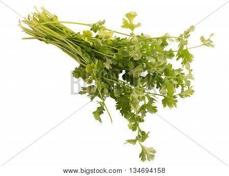 Bunch of fresh coriander isolated on white background