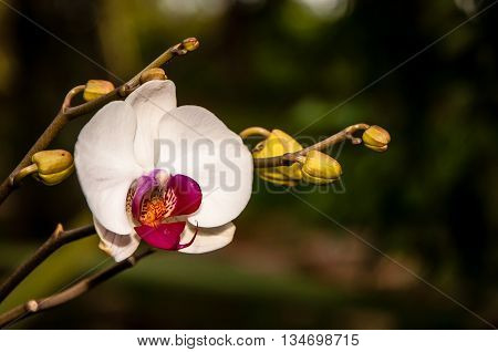 Orchid and sprouts with a defocused green background