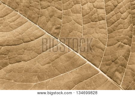 abstract natural texture of a surface of a leaf of a plant with streaks closeup for a natural background or for wallpaper of brown color