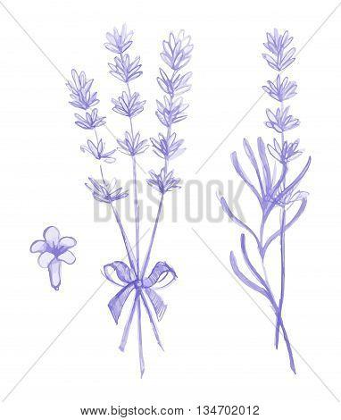 Purple lavender flowers victor hand drawn set