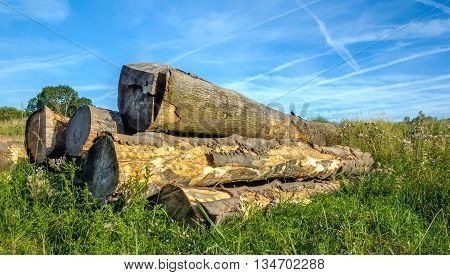 Pile of thick felled trees on the earth in a rural area with wild plants. It is a sunny day in the summer season.
