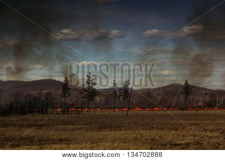 The fire in the field. Fire line. Disaster. Landscape.