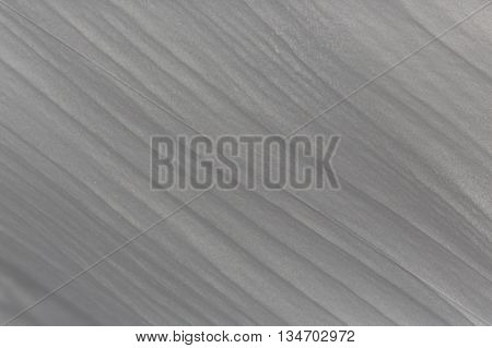 Natural structure of snow mantle with stripes