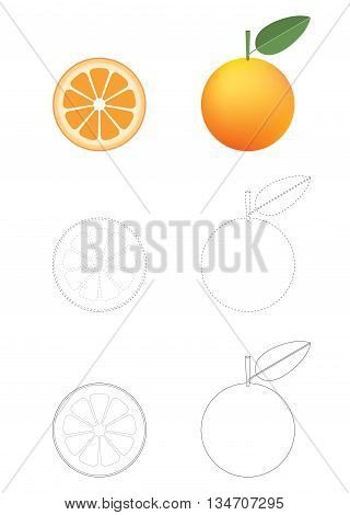 image of Oranges coloring pages isolated on white