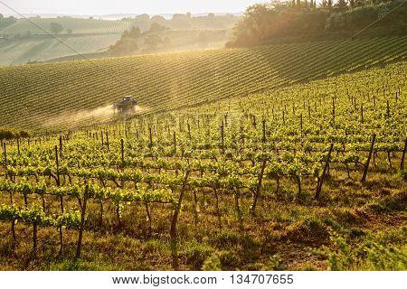 Tuscan vineyard at sunrise, tractor spraying vines