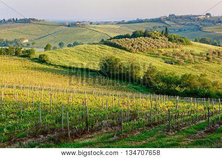 Tuscan vineyard shot at sunrise