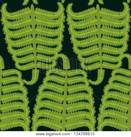 Vector Hand drawn Decorative pattern with fern ornament. Seamless repeating fern background