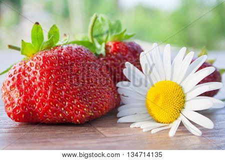 big strawberry and camomile a still life on a table